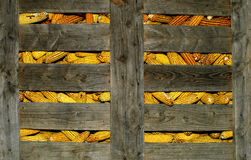 Corn. Stored in a wood cage Royalty Free Stock Image