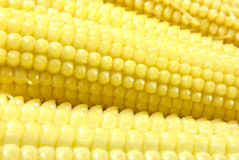 Corn. Close-up of fresh baby corn Stock Photography