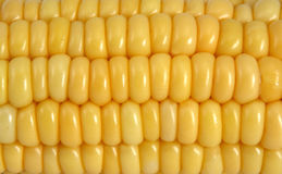 Corn. Yellow corn background close up Royalty Free Stock Photos