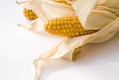 Corn. On the white background Royalty Free Stock Photos