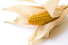 Corn. On the white background Stock Photos