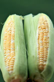 Corn. Two Freshly  Corn on Green Background Stock Photography