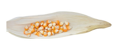 Corn. Dry corns on corn leaves with clipping path Stock Photography