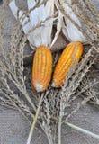 Corn. Around fry  flowers Stock Photo