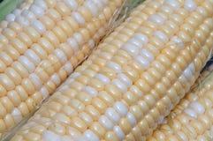 Corn. Sweet corn Royalty Free Stock Photography