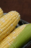 Corn. Sweet corn in husk on black background Royalty Free Stock Images