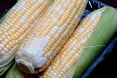 Corn. Tasty sweet corn in husk on black background Stock Photo