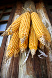Corn. The wind hanging in the house. The feeling of harvest Royalty Free Stock Photos