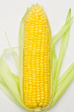 A corn Royalty Free Stock Photo