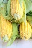 Corn. Three yellow corn on a white background royalty free stock photo