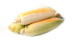 Corn. Isolated on white background royalty free stock images