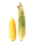 Corn. Isolated on white background Stock Photography