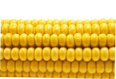 Corn. Ripe yellow corn close up Royalty Free Stock Images