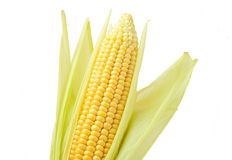Corn. On the cob on a white background isolated royalty free stock image