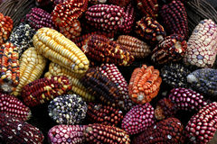 Corn. Different types of corn on a market in peru Royalty Free Stock Images