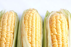 Corn. Harvest. Fresh vegetables - background Stock Photo