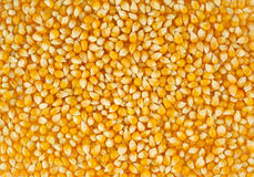 The corn Stock Image