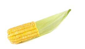 Corn . Corn isolated on white background Stock Photos