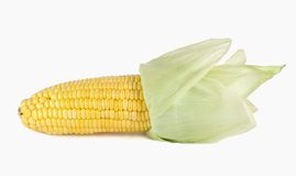 Corn . Stock Photography