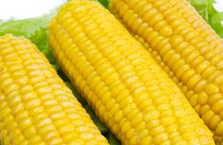 Corn 2. Corn cobs on the fresh leaves of lettuce stock photo