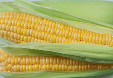 Corn. Cob between green leaves Royalty Free Stock Photography