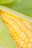 Corn Stock Images