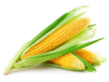 Corn. An ear of corn isolated on a white background