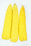 Corn Royalty Free Stock Photos