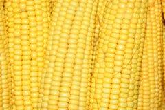 Corn. Super close-up of a natural corn Royalty Free Stock Photography