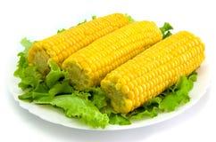 Corn. Three corn cobs on the plate stock photos