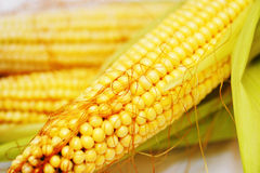 Corn. Largely, ripe, juicy three ears Stock Photo