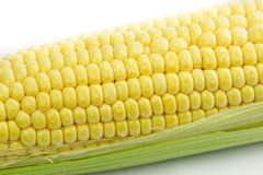 Corn. Fresh corn with green leaves Royalty Free Stock Photo