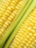 Corn. Yellow corn on the cob Stock Photos
