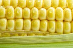 Corn. Fresh corn with green leaves Stock Photo