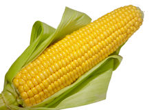 Corn. Cob on a white background Royalty Free Stock Photography