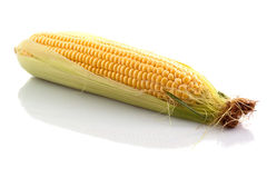 The corn Stock Image