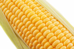 The corn Royalty Free Stock Photography