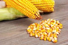 Corn. Fresh organic corn on the table Stock Photography