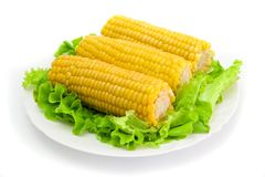 Corn 3 Royalty Free Stock Photos