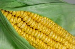 Corn. Keeping Cholesterol Down Stock Image
