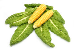 Corn. On a photo corn on leaves of salad Royalty Free Stock Photos