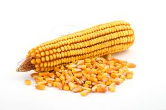 Corn. Vegetable isolated over the white background Royalty Free Stock Image