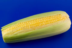 Corn. Isolated on blue background Royalty Free Stock Photography