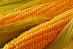 Free Corn Royalty Free Stock Photography - 3681957