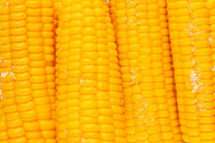 Corn. On the cob, boiled ,  meal, ripe , juicy , Photo boiled , Photo pop,  background, tasty Stock Images