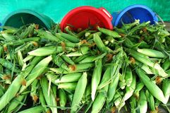 Corn. Pile of corn for concept of fall harvest or bio fuel Royalty Free Stock Photography