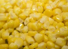 Corn. Sweet yellow corn background. macro shot Stock Images