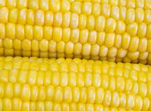 Corn 5. Extreme close-up view of corn cobs royalty free stock image