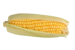 Corn. Fresh cob of corn on a white background Stock Photo
