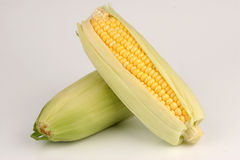 Corn. Fresh corn cobs on white background Royalty Free Stock Image